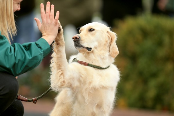 doggie-high-five