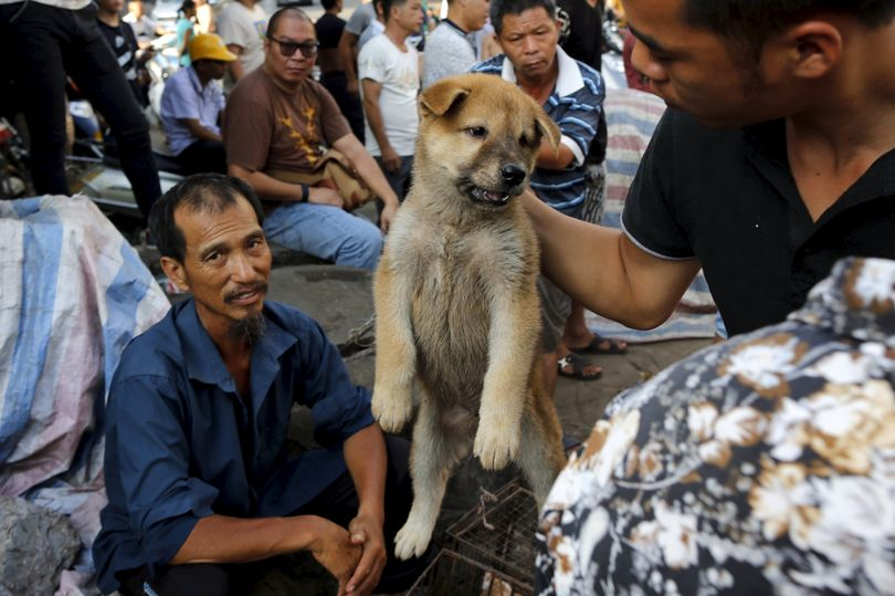 A-customer-holds-a-puppy-for-viewing-at-Dashichang-dog-market-ahead-of-a-local-dog-meat-festival-in.jpg