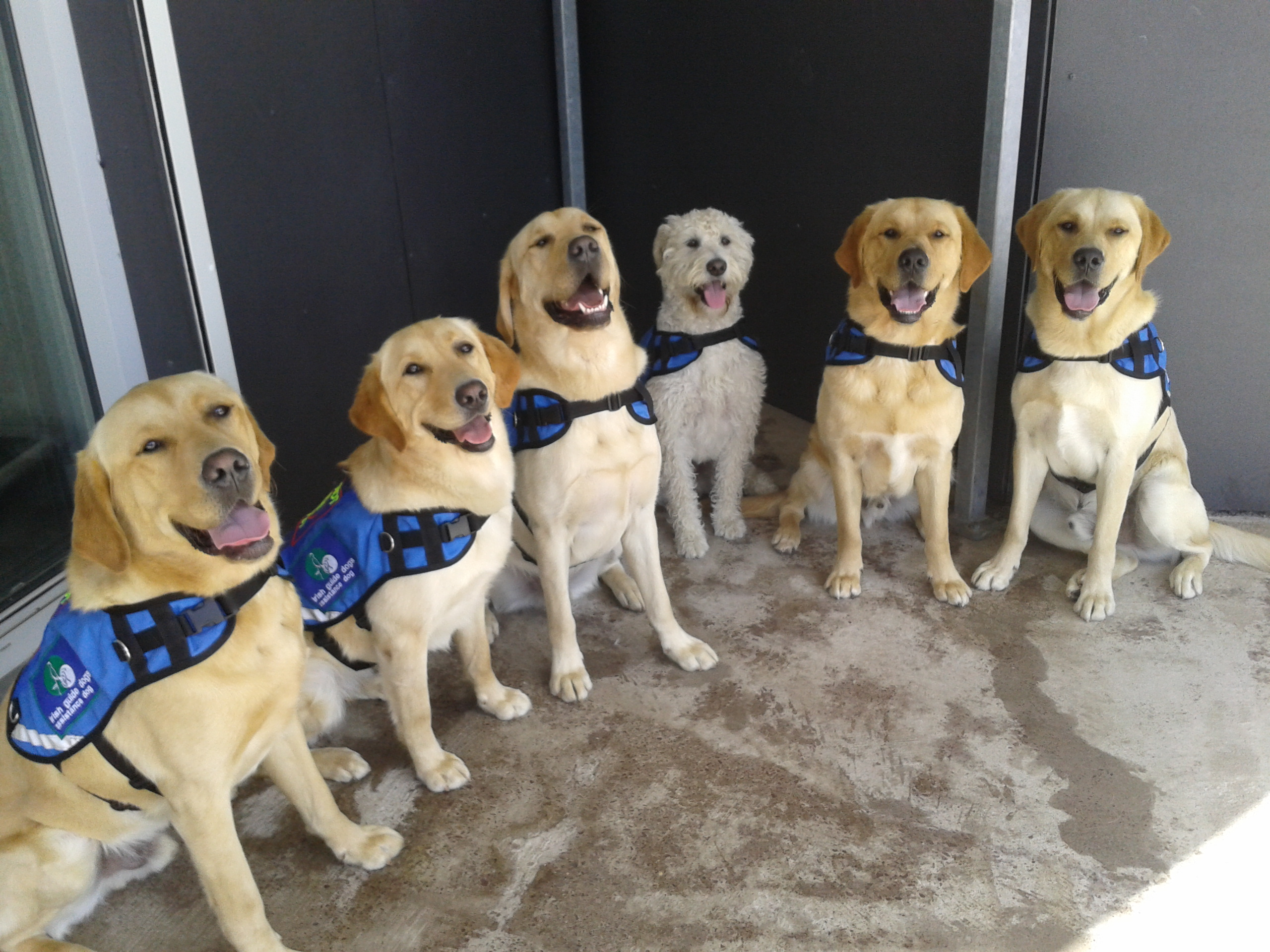 Image of: Plane Alliance Of Therapy Dogs The Importance Of Emotional Support Animals
