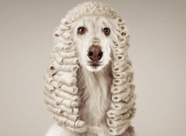 Dog-Dressed-in-Judges-Wig-Costume.jpg