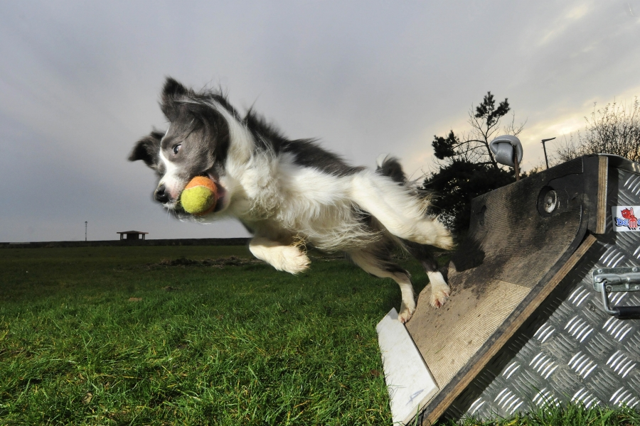 Flyball-box-turn.jpg