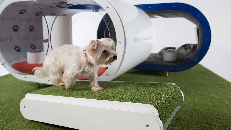 Samsung la niche de r ve pour votre chien ozap - Tapis gazon pour chien ...