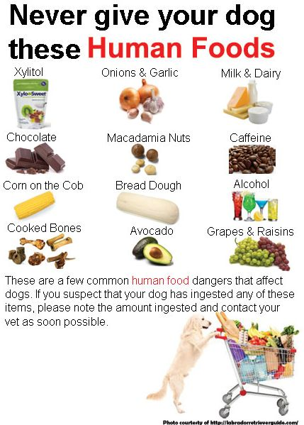 Can Raw Food Cause Seizures In Dogs