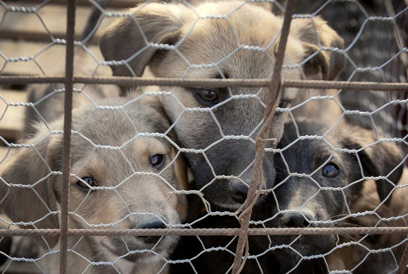 Romania-Street-Dogs.jpg