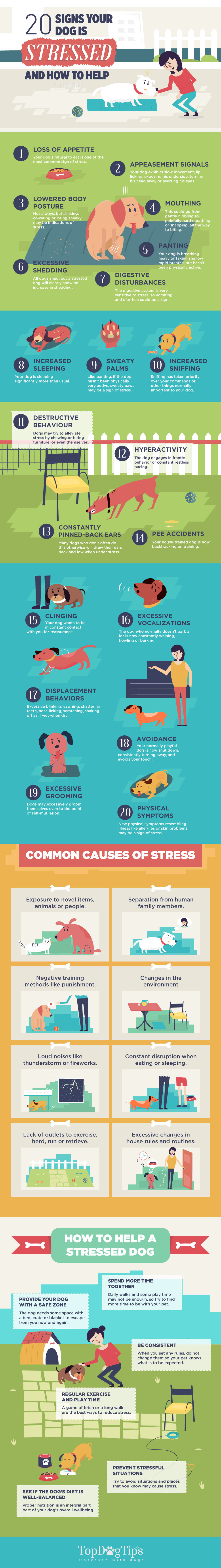 Signs-of-Stress-in-Dogs.jpg