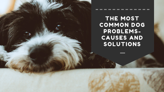 The Most Common Dog Problems- Causes And Solutions.png