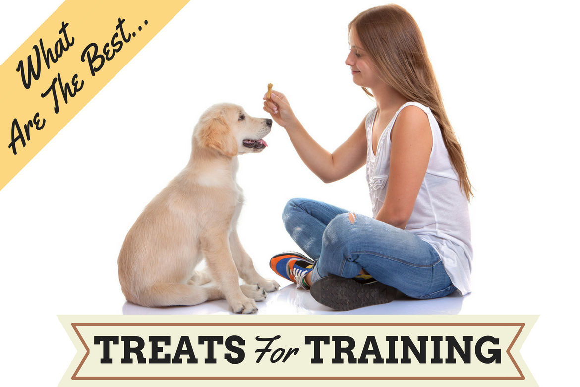 The-best-dog-treats-for-training.jpg