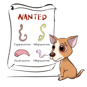 Types-of-worms-in-dogs-300x300.png