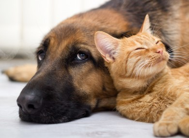 cats-and-dogs.jpg