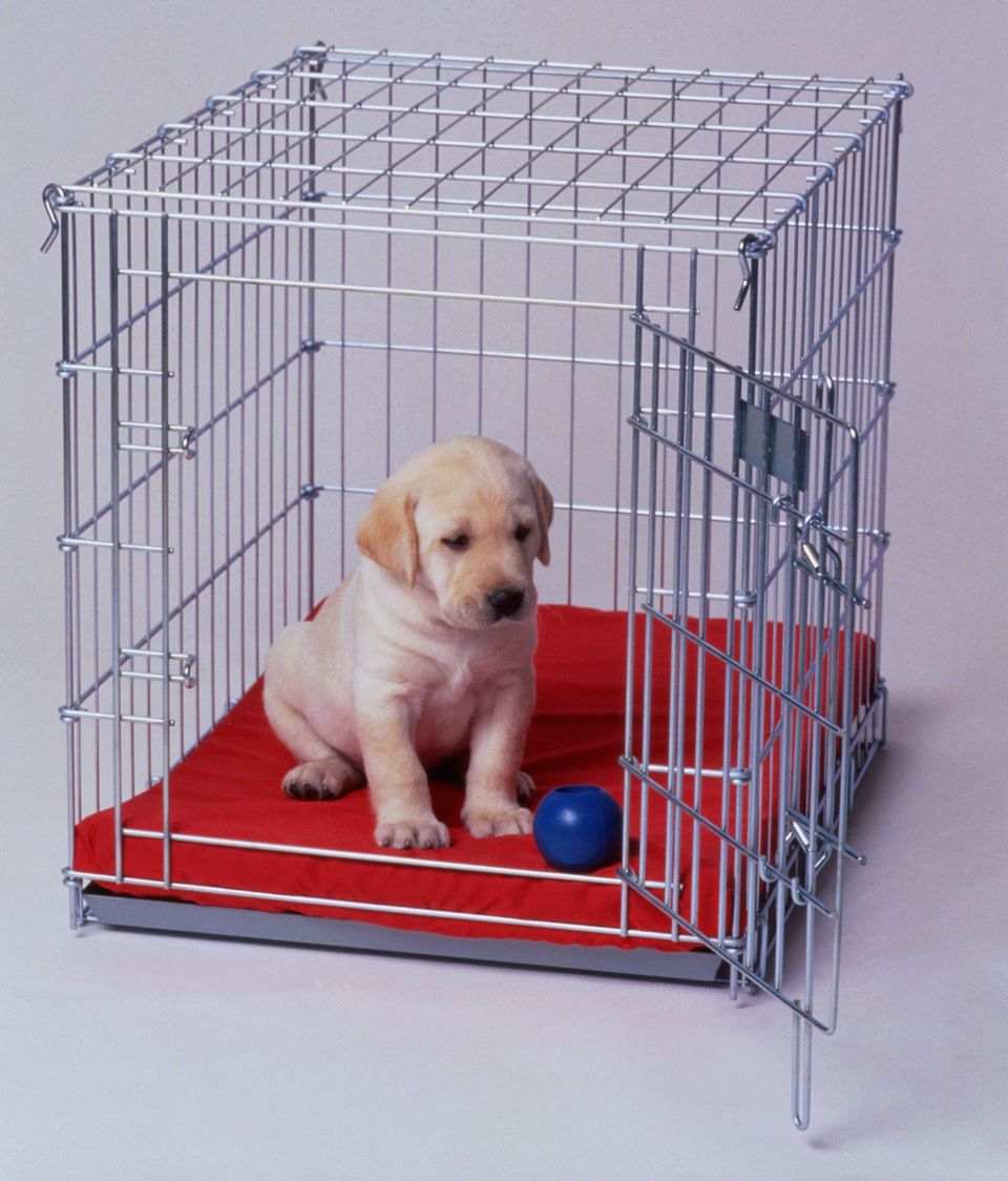 crate-training-dogs.jpg