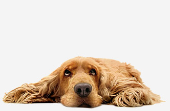Natural Prozac For Dogs