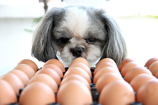 dogs-and-eggs.jpg