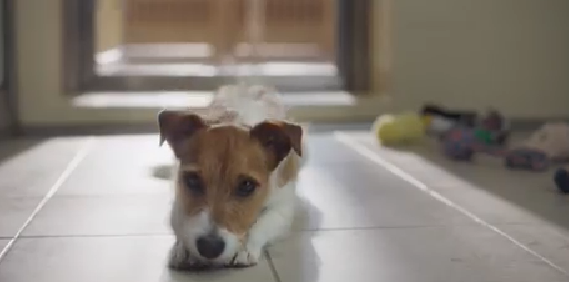 dogs-trust-ad.png