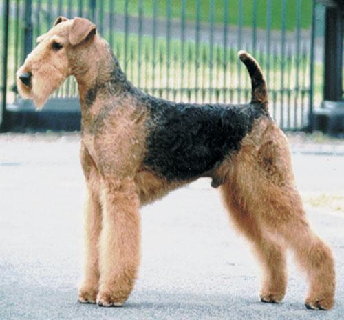 Irish Dogs On The Net