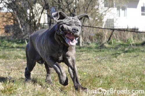 Neo Mastiff Dog Beds
