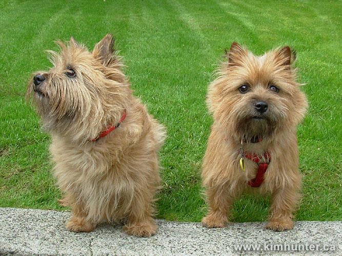 Irish Dogs on the 'Net ...