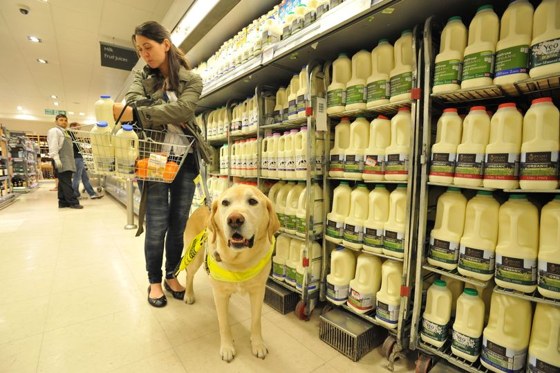 guide-dog-in-supermarket.jpg