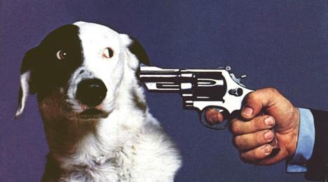 gun-to-dog-head.jpg