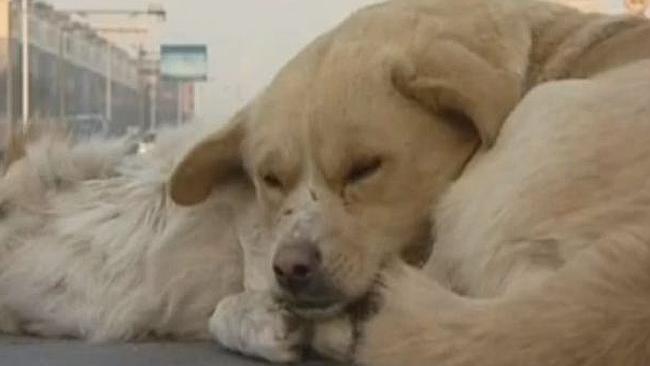 Loyal Dog Keeps Dead Friend Company