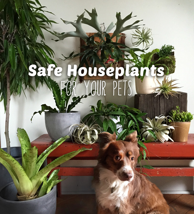 pet-safe-indoor-plants.jpg