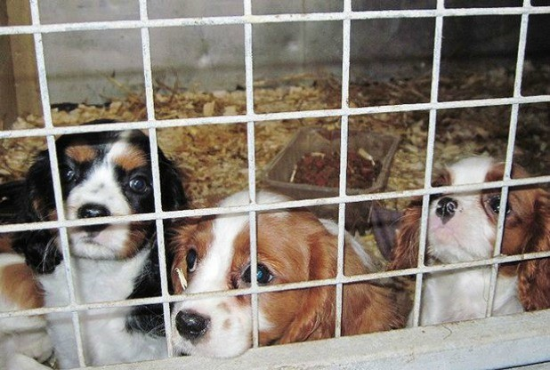 puppy-farm-cornwall.jpg