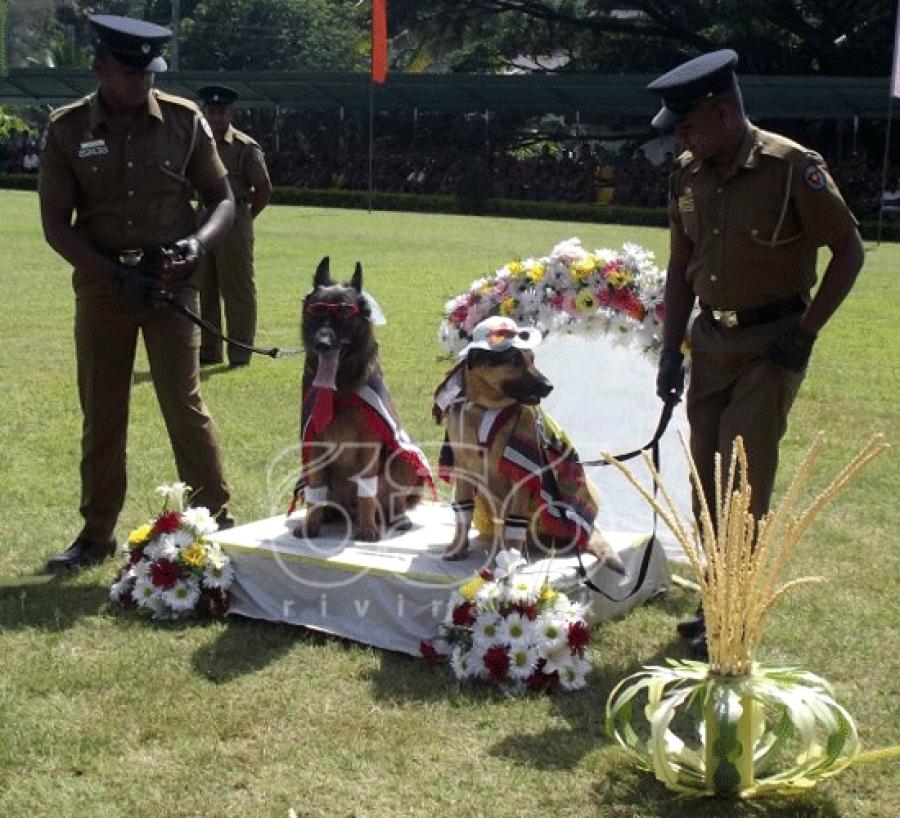 Sri Lanka Police Apologise For Dog Wedding