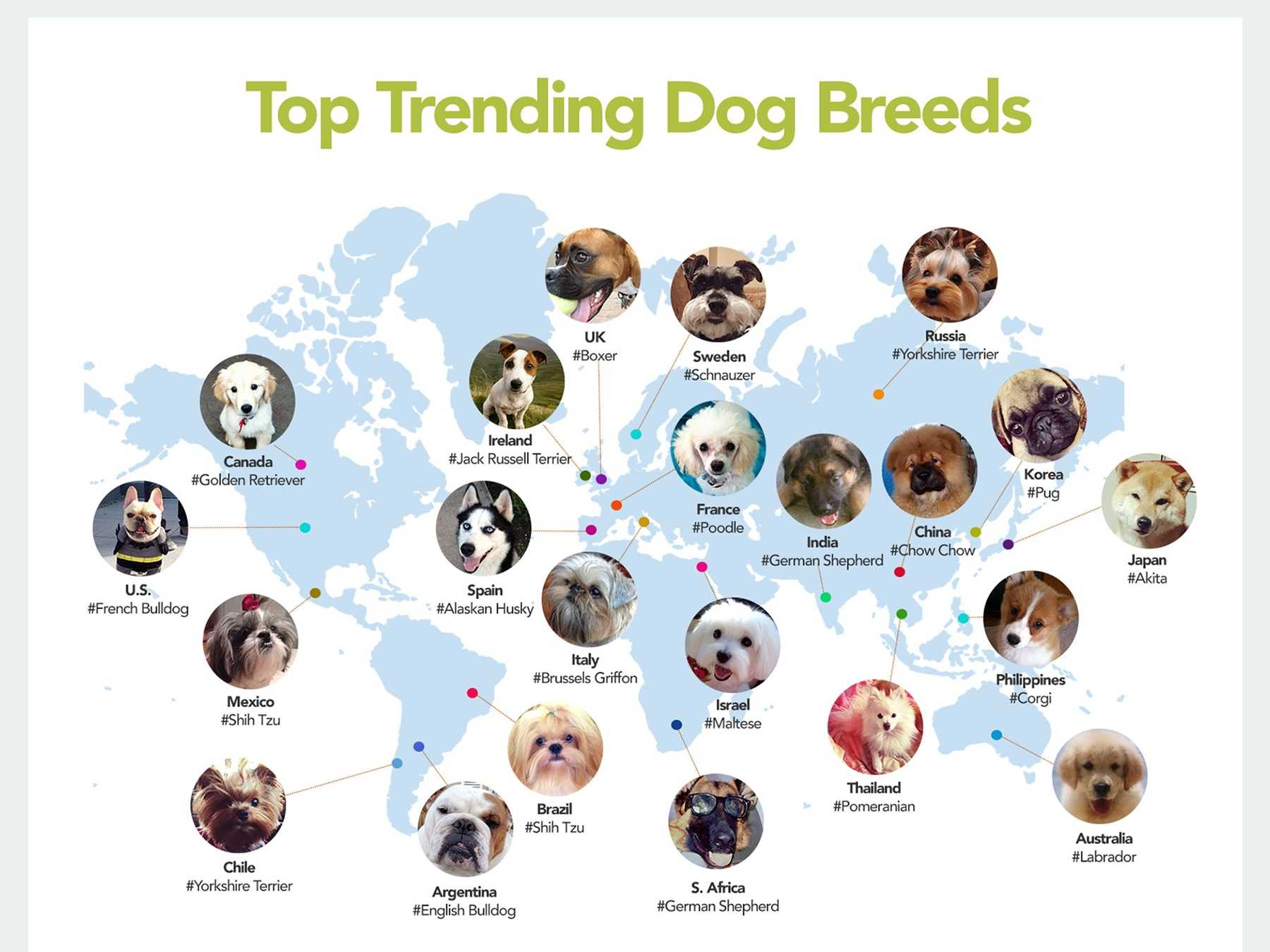 Dog breeds and what you should know about them for Types of dogs with photos