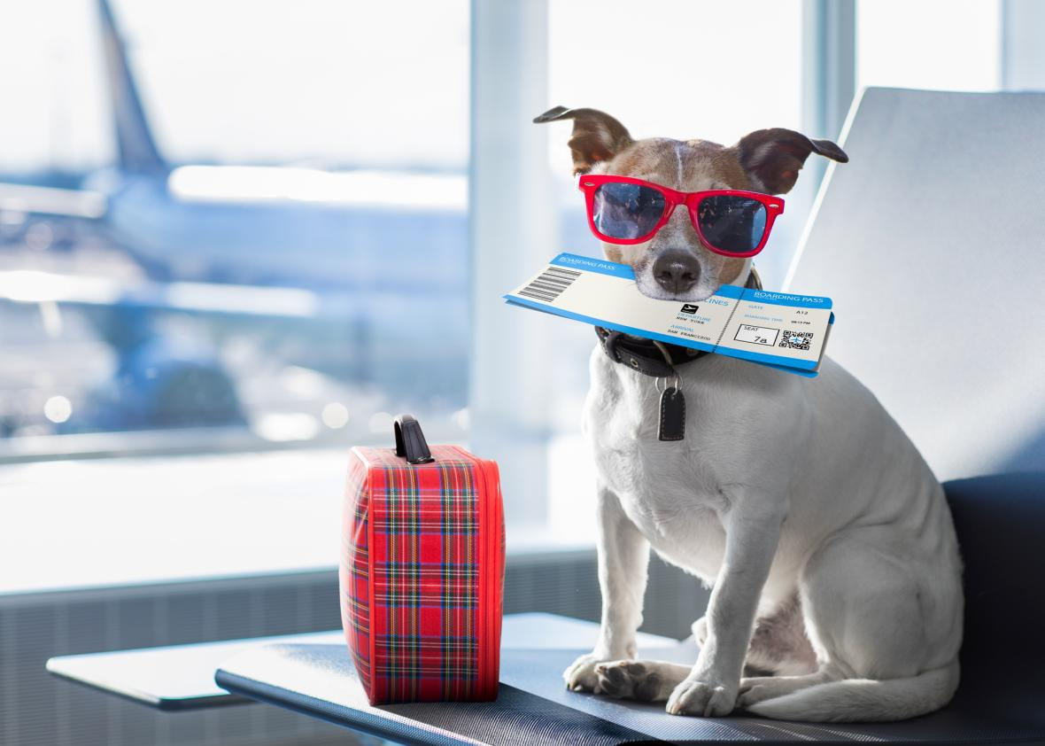 travelling-dog-on-plane.jpg