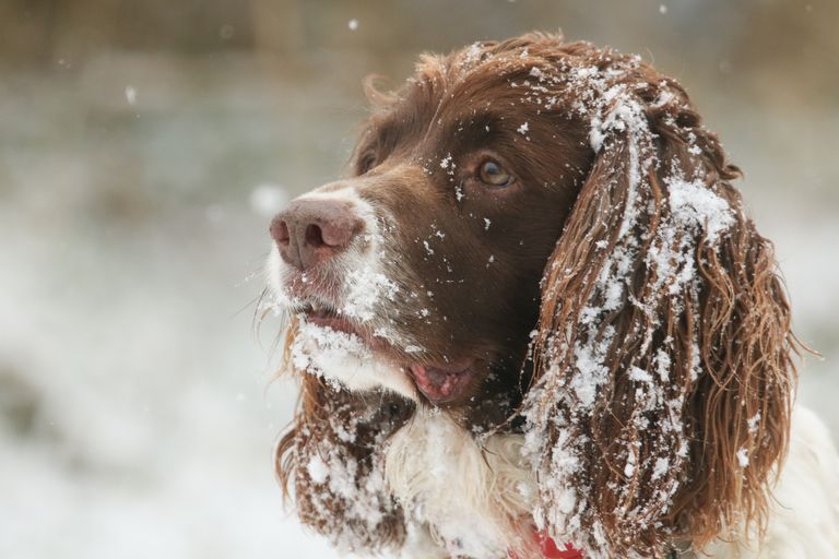 winter-care-for-dogs.jpg